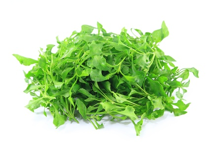 water cress: water cress on white background