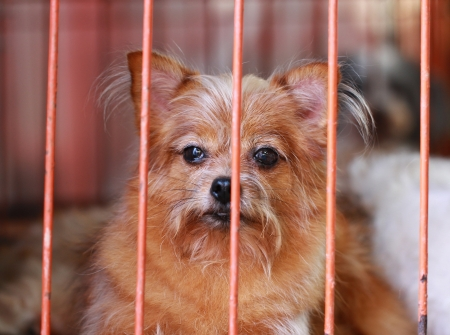 lonely dog in cage Stock Photo - 18007383