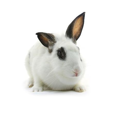 fleecy: white rabbit on white background Stock Photo