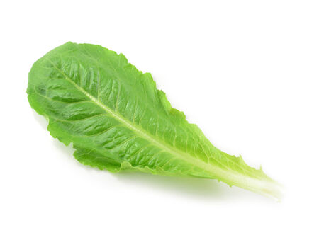 cos: Cos Lettuce isolate on White Background  Stock Photo