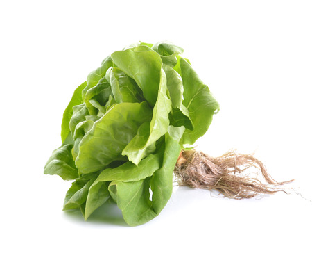 fresh butter head lettuce isolated on white background photo
