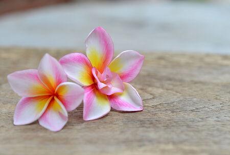 Tropical flower frangipani (plumeria) on table photo