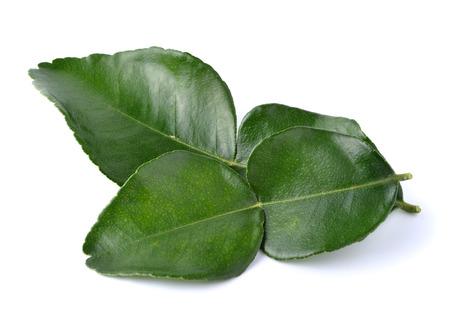 leaf of bergamot (kaffir lime) on white