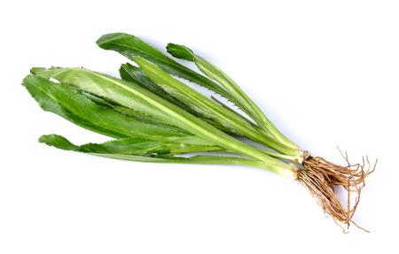 エリンジウム foetidum または長いコリアンダーの葉