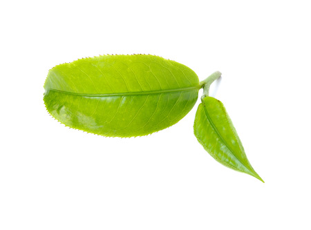 green leafs: green tea leaf isolated on white background
