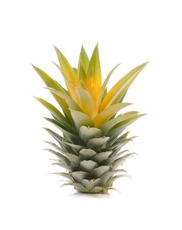 pineapple tree: �rbol Pi�a aislada en el fondo blanco