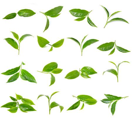 흰색 배경에 고립 된 녹차 잎 스톡 콘텐츠