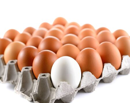 duck egg: duck egg and chicken eggs in egg tray