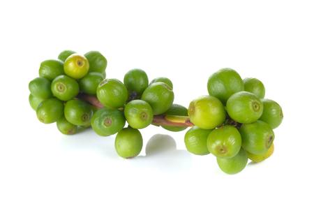 green bean: Green Coffee bean on white background