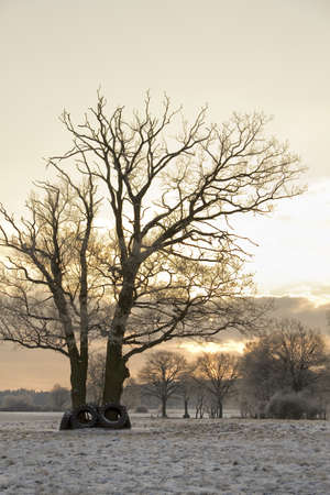 winter scene with big tree in the morning light Stock Photo - 16256169