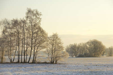 snowcovered: winter landscape with snow-covered trees