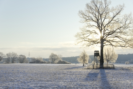 winter landscape with raised blind and tress on the wide field Stock Photo - 16256170