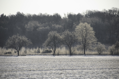 field landscape with snowy trees and forest in the morning light photo