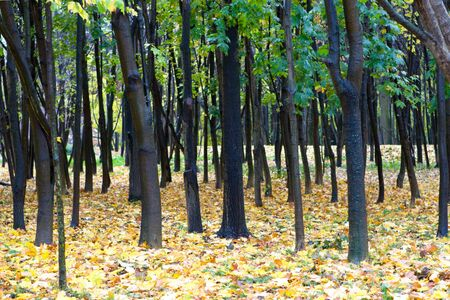 Trees in forest in autumn with rain Stock Photo - 4298516
