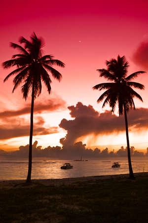 Two black palm on a night beach red orange sky