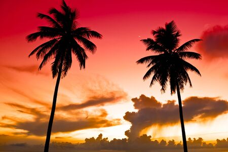 Two black palm on a night beach red orange sky Stock Photo - 4850250