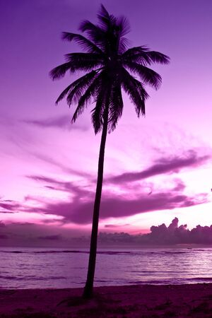 black palm on a night beach purple night Stock Photo - 4850244