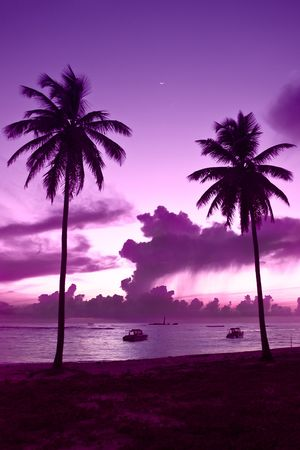 caribbean climate: Two black palm on a night beach purple night Stock Photo