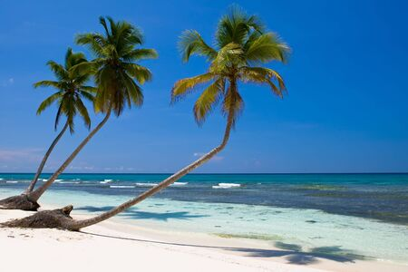 three palms on the beach island with blue sky