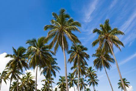 many palms on the beach island on blue cloudy sky Stock Photo - 4883642