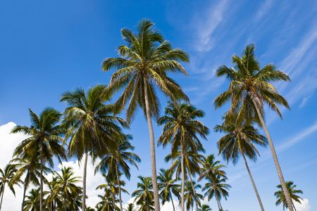 many palms on the beach island on blue cloudy sky Stock Photo - 4883642