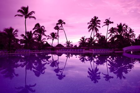 Many black palm on a night beach purple night near pool