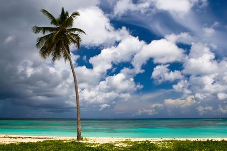 three palms on the beach island with blue cloudy sky  Stock Photo - 4925583