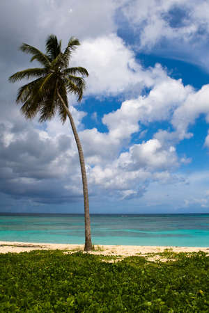 three palms on the beach island with blue cloudy sky Stock Photo - 4959874