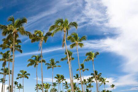 many palms on the beach island on blue cloudy sky