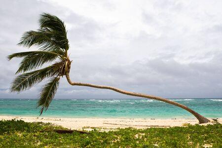 palm on the beach island with blue cloudy sky Stock Photo - 4995151