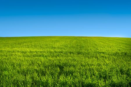 meadow: Green grass meadow with blue sky in summer