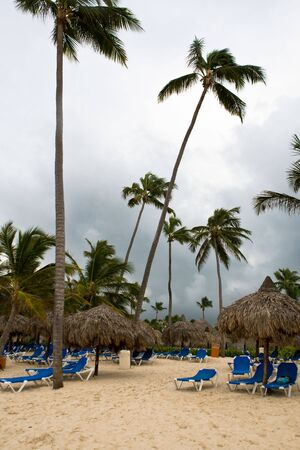 many palms with umbrellas sushades on the beach on cloudy sky Stock Photo - 5066654