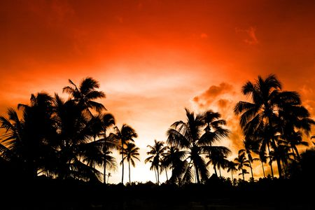 black palm on a night beach orange night Stock Photo