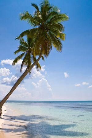 palms on the beach island with blue sky Stock Photo - 5251443