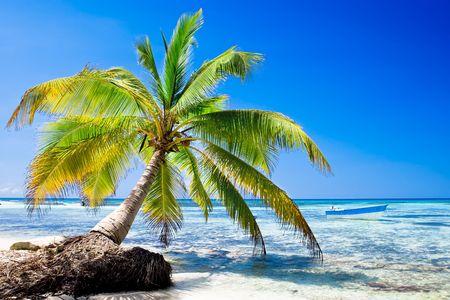 Palm on white sand beach near cyan ocean under blue sky Stock Photo