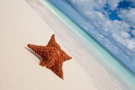Red starfish on a sand beach near ocean
