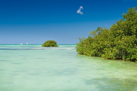 Mangrove green forest in a blue ocean in summer Dominican republic Stock Photo