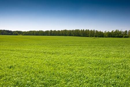 Green grass field under a blue bright sky Stock Photo