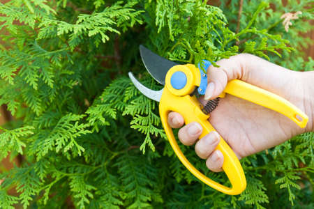Man hold in hand plastic garden clipper to cut bush in summer photo