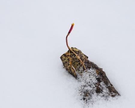 Last Leaf to Fall Stok Fotoğraf
