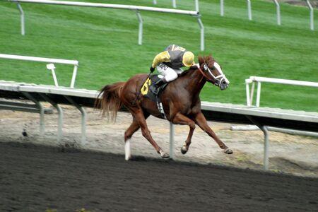 Paardenraces in San Francisco, Californië Stockfoto - 933870
