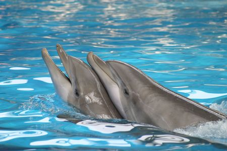 Dolphins playing in a pool Stock Photo