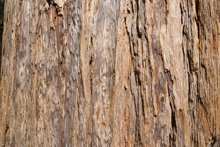 red wood texture photo