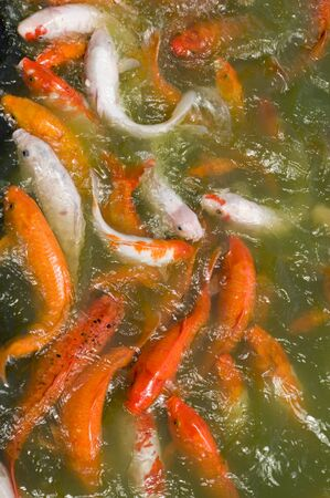 Fishes eating