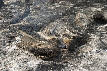 close ups: Burned Forest  close ups