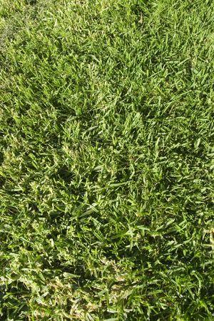Fresh Grass Close up Stockfoto