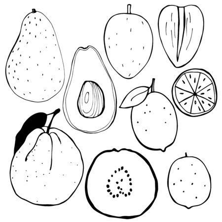 Hand-drawn fruits. Avocado, lime, guava, Sapodilla.  Vector illustration.