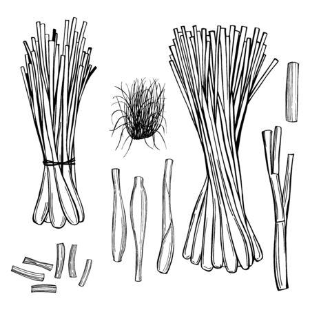 Hand drawn lemongrass set. Vector sketch illustration