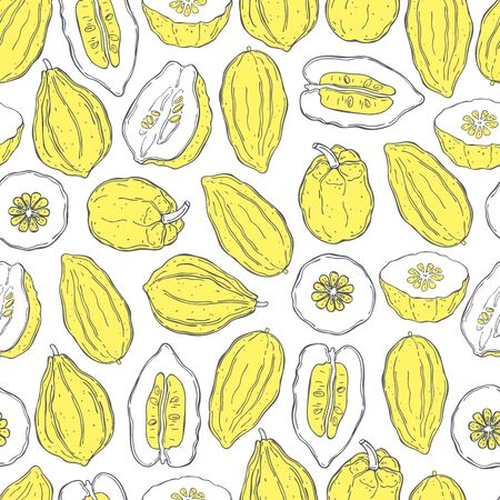 Hand drawn citron.  Vector  seamless pattern