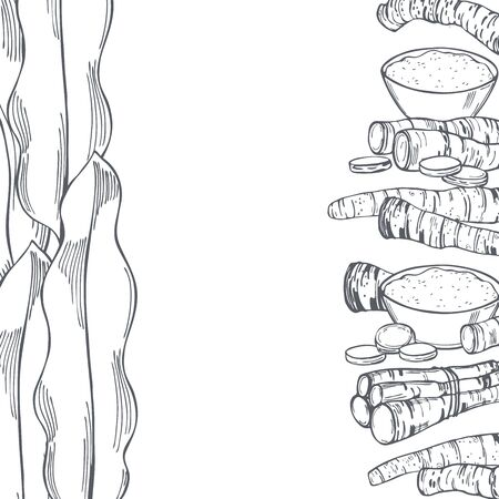 Hand drawn horseradish, root and leaves. Vector background. Sketch illustration.